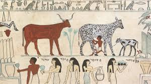 The Neolithic Revolution in Egypt. People went from hunting and gathering their food to raising crops and animals. You see here a picture painted by early Egyptians of people tending their cattle, for example.